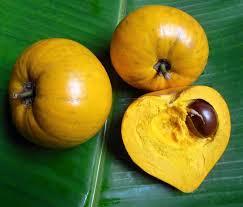 Frutas Equatoriais: Abiu Cutite ou Tuturubá