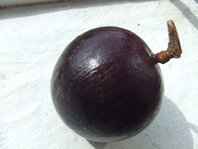 Frutas Equatoriais: Abiu Roxo ou Caimito