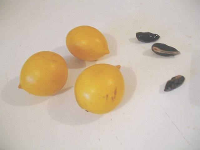 Frutas Equatoriais: Abiu ou Abieiro