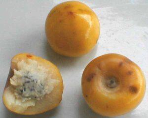Frutas Equatoriais: Murici ou Muruci